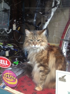 cat in bike shop